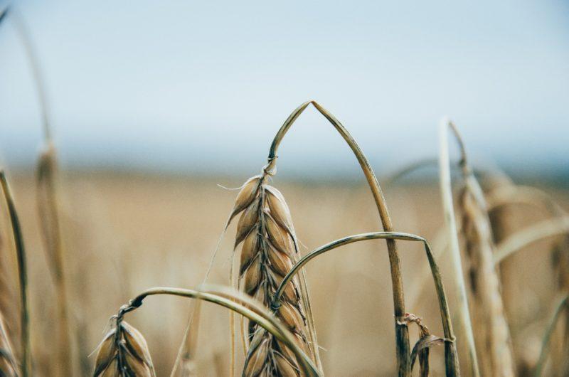 biotalous on myos ruokaa