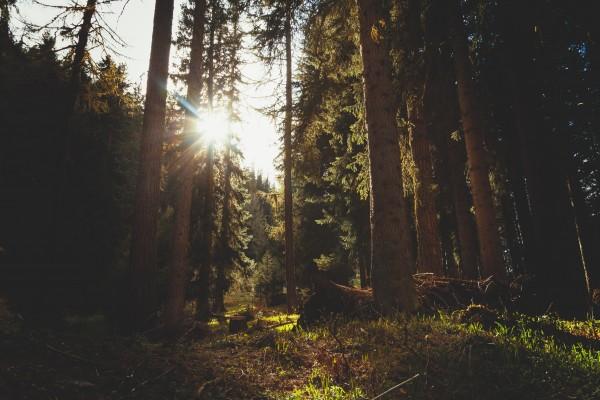 Bioenergian päästöt on helppo lukea väärin